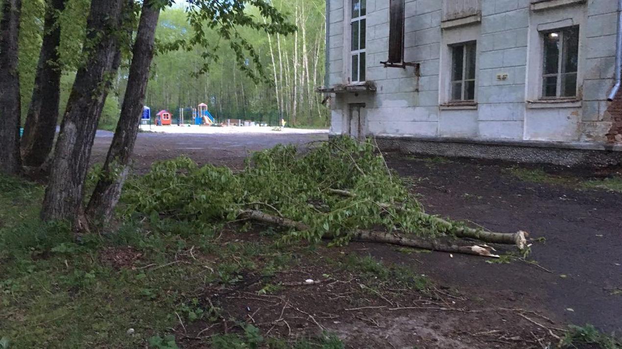 Во время шторма на девушку с детской коляской упало дерево. Пострадавшая в тяжелом состоянии