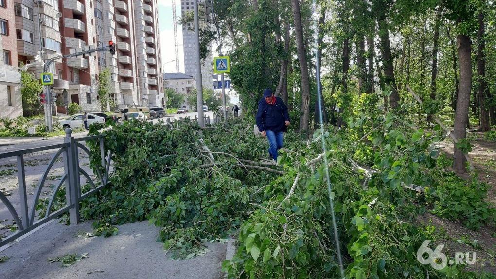 В Екатеринбурге до конца года спилят и обрежут более 5000 деревьев
