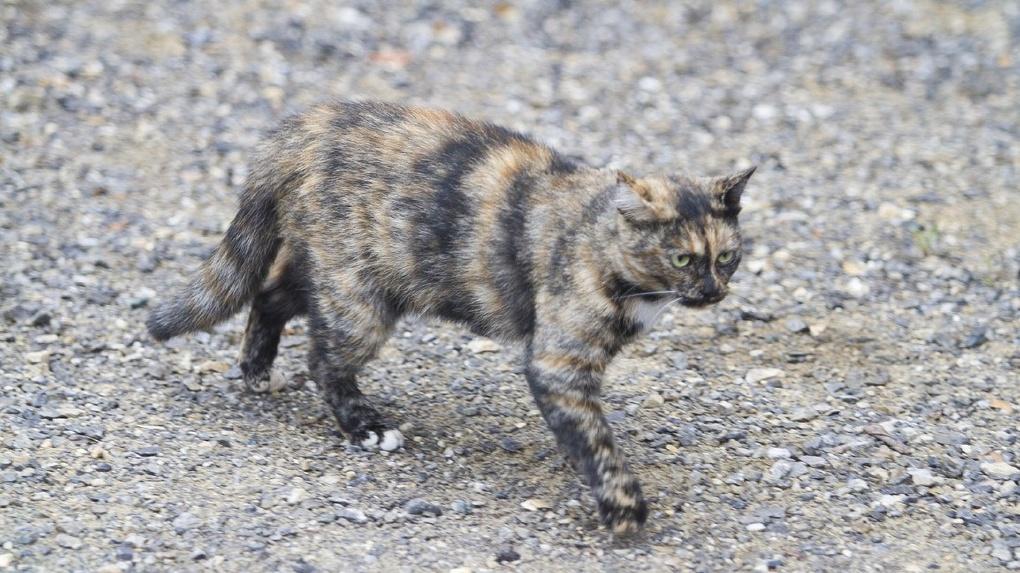 Минстрой запретил замуровывать подвалы ради бездомных кошек