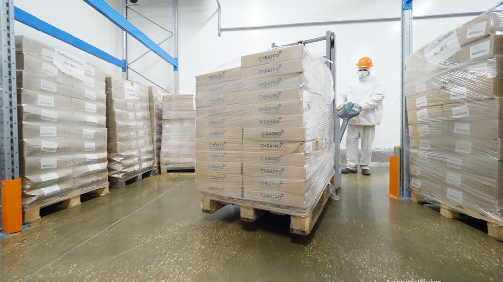 Покорение Востока. Свинокомплекс «Сибагро» на Урале расширил список экспортных поставок