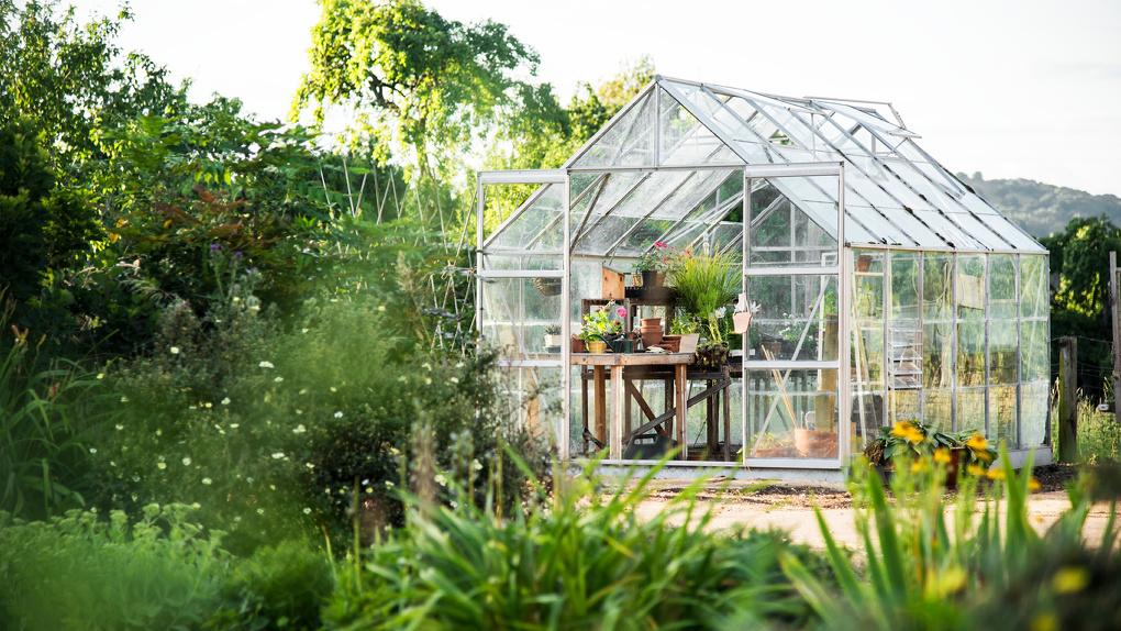 25 растений, которые специалисты рекомендуют использовать, если вы решили разбить сад в городском дворе