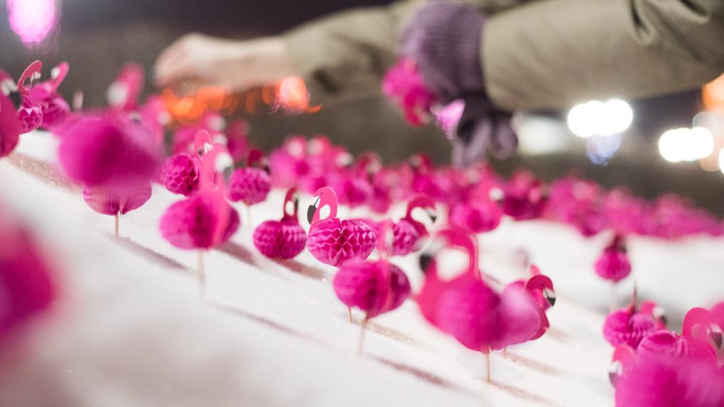 Думай о хорошем. Стайка розовых фламинго дарит всем любовь у городского пруда