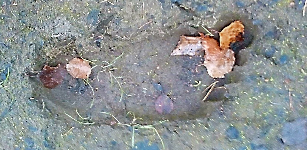 Охотники нашли огромные следы в уральской тайге. Говорят, их оставил снежный человек. Фото