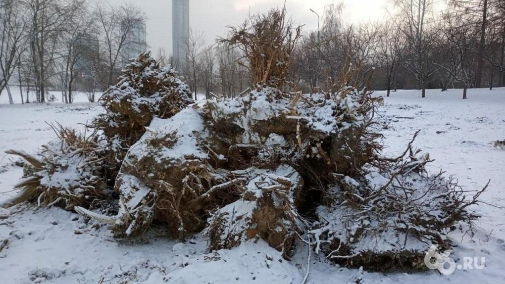 Прокуратура признала вырубку деревьев в парке УрГУПС незаконной и требует наказать виновных