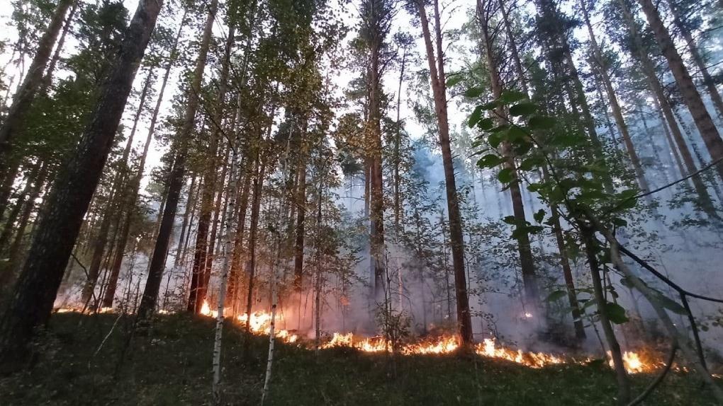 Под Екатеринбургом полыхают леса: под угрозой возгорания еще одно СНТ