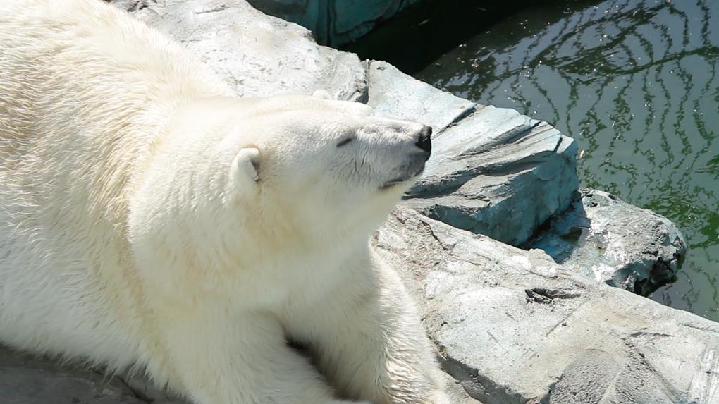 Зоопарк без людей: фотовидеорепортаж