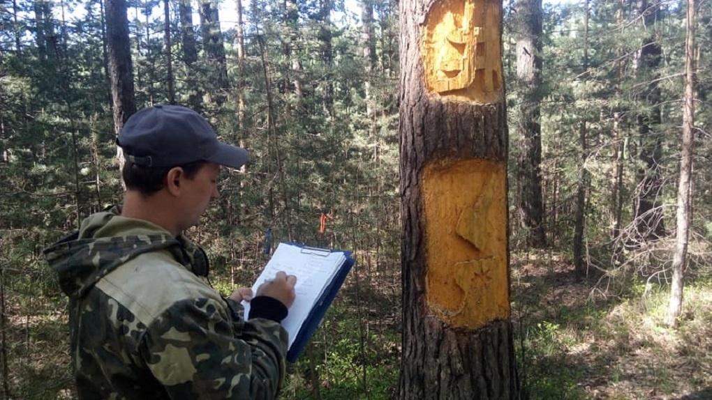 Деревья в лесу под Березовским заклеймили мистическими знаками. В деле разбираются лесники и религиоведы