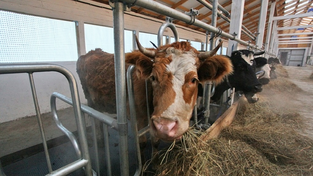 Сбербанк банкротит одну из крупнейших ферм Свердловской области