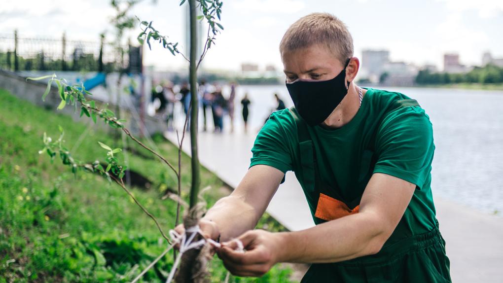 В Екатеринбурге вдоль набережной городского пруда высадили уральские плакучие ивы
