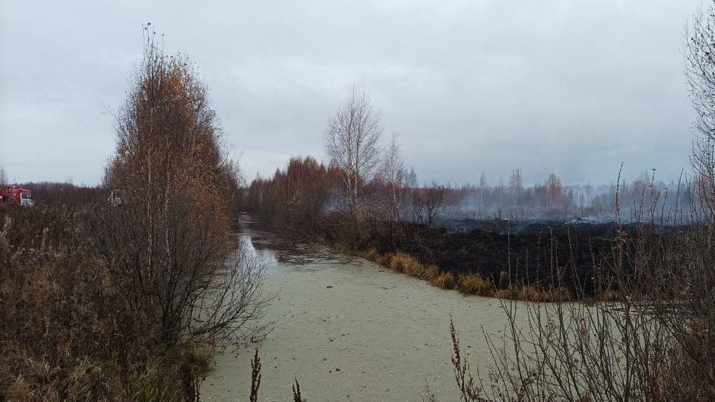 Полсотни пожарных тушат тлеющие торфяники, из-за которых Екатеринбург заволокло дымом. Фото