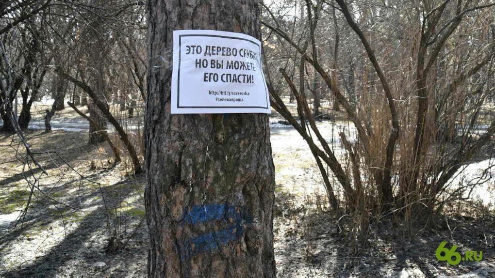 Как спасти деревья от уродующей обрезки «под пень». Инструкция от человека, который смог