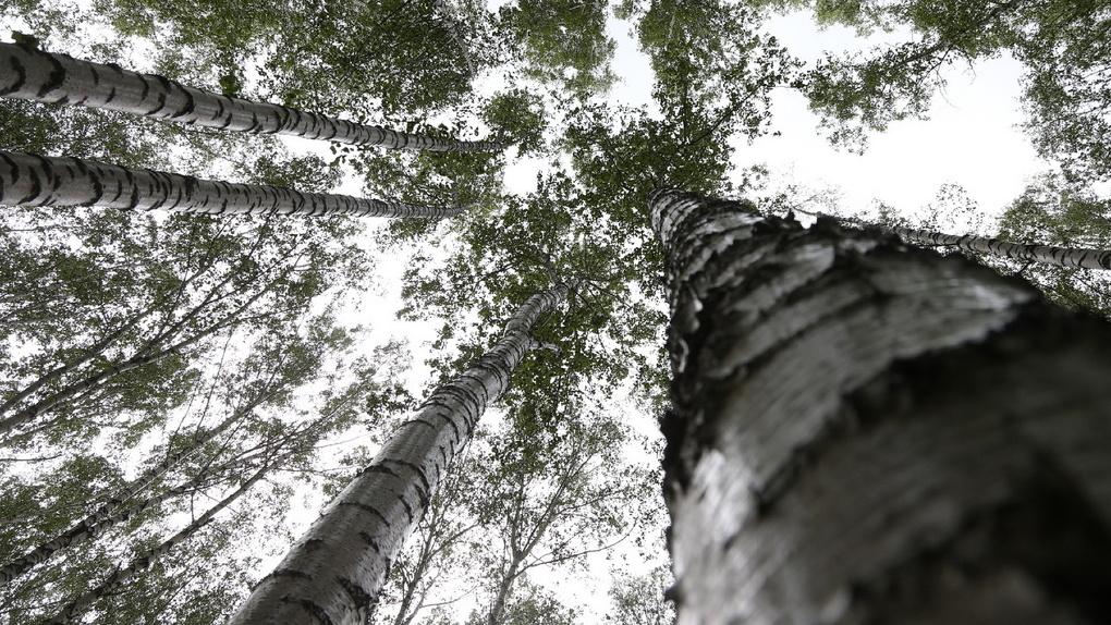 20 тысяч горожан выбрали парки, которые нужно благоустроить к 2021 году. Эскизы