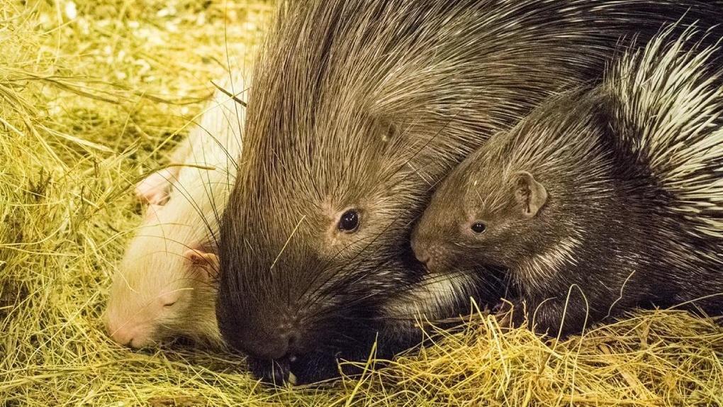 «Кормов осталось на две недели»: из-за пандемии в научном зоопарке могут умереть от голода 332 животных