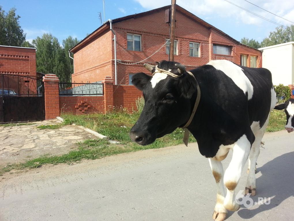 Поручения Путина — в жизнь! Льготников поселили между кладбищами