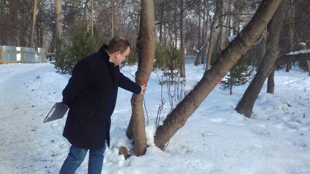 В Зеленой роще вырубят 46 деревьев
