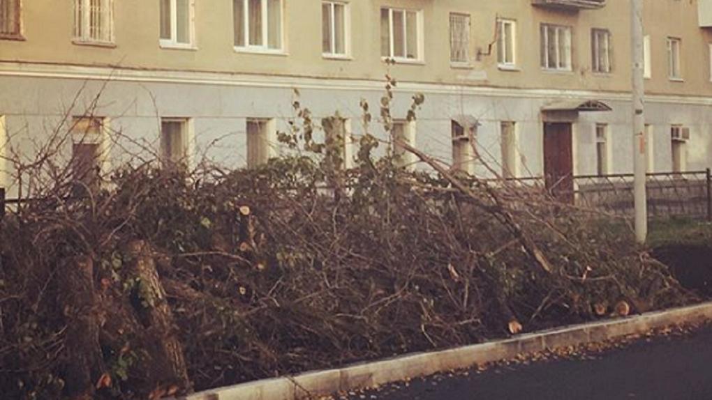 «Не деревья больные, а люди оскотинились вконец». На Бажова вырубили грушевую аллею