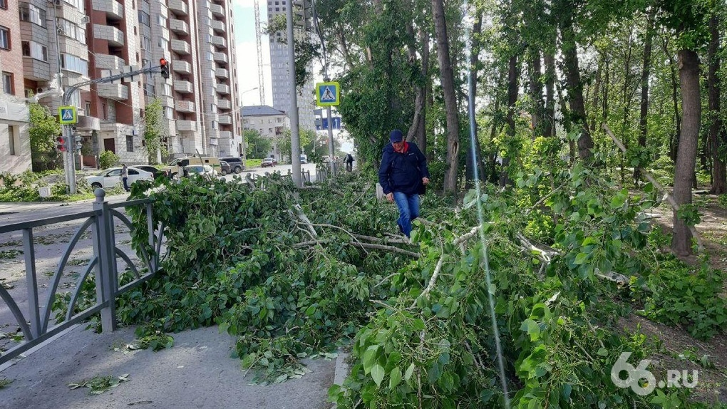 В Свердловской области умерла женщина, на которую упала ветка дерева. Это уже четвертая жертва урагана