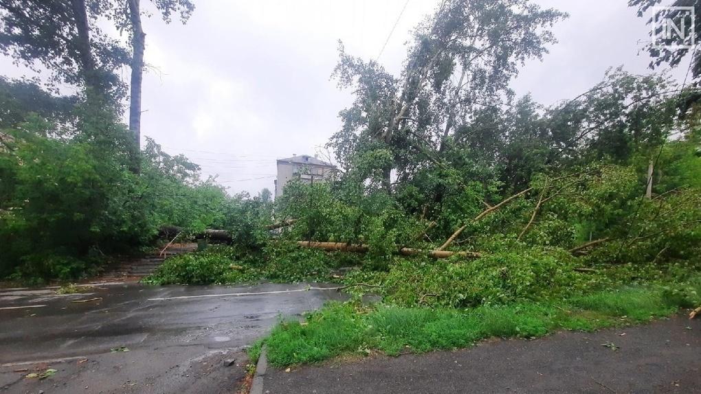 Дороги и дворы Екатеринбурга завалены упавшими деревьями. Кого и как заставить их убрать?