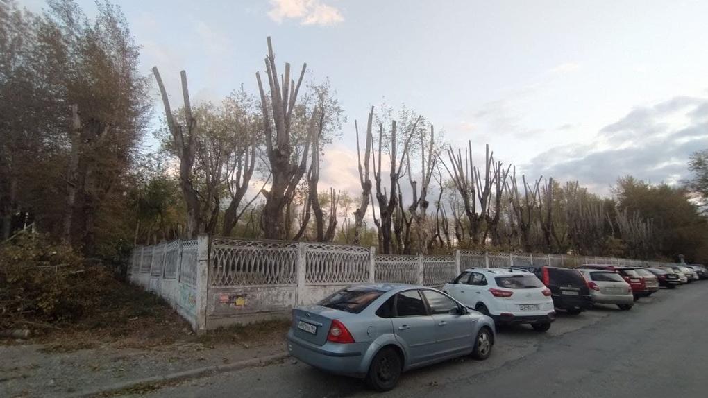От деревьев на Эльмаше оставили лысые столбы. В мэрии такое кронирование назвали «более-менее правильным»