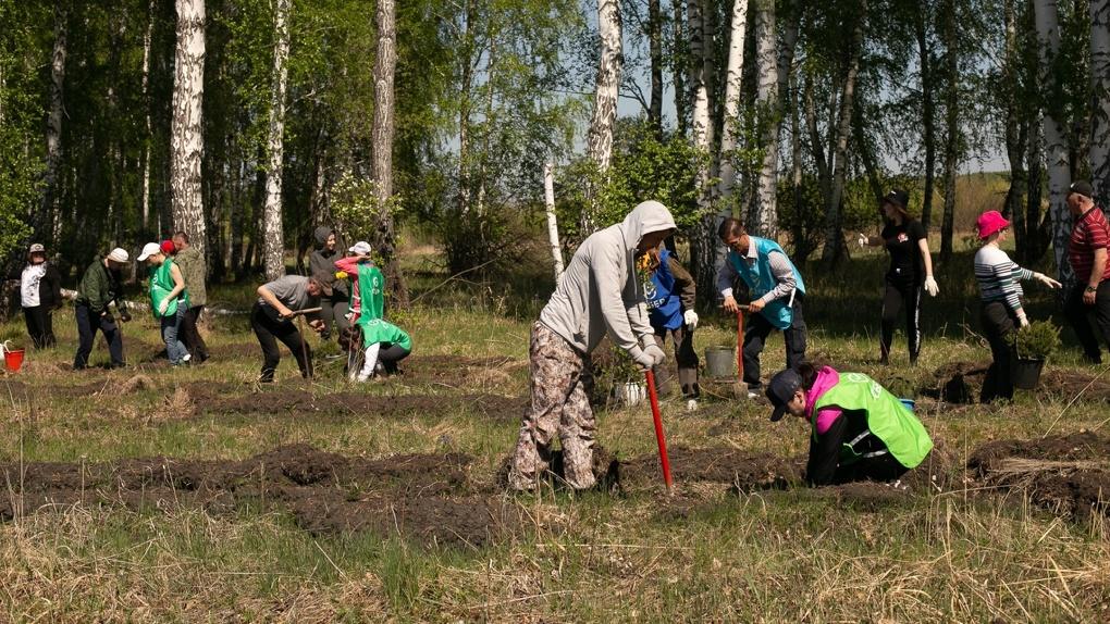 В России и за рубежом проходит акция «Сад памяти». Как посадить дерево в память о своем ветеране