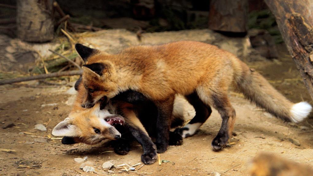В Екатеринбурге открывается зоопарк. Как сходить и не заразить животных