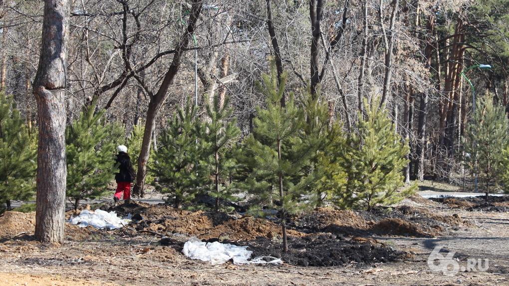 Озеленитель Зеленой рощи пообещала привлечь догхантеров к охране закрытого на реконструкцию парка