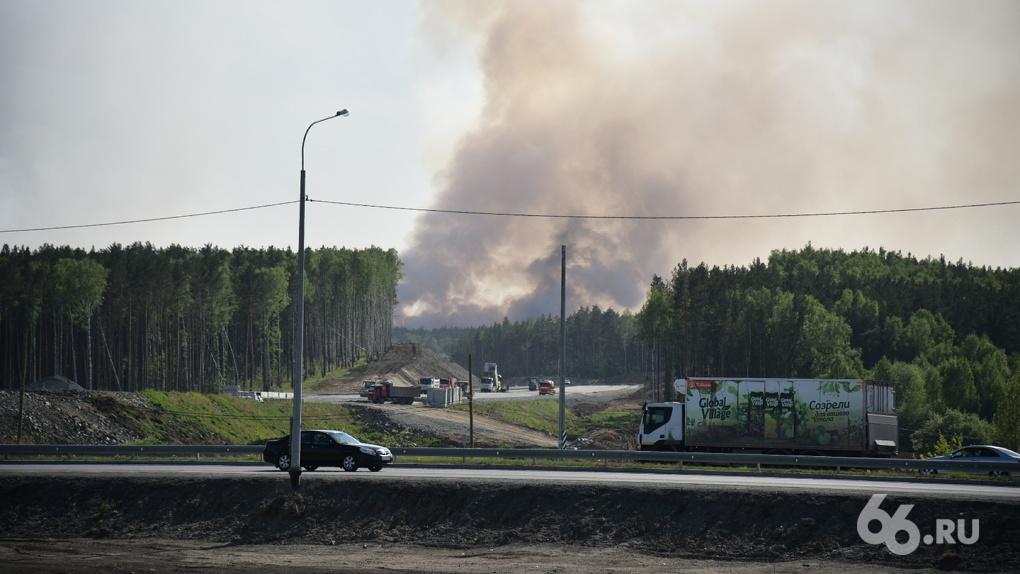 В Екатеринбурге горят 60 га Южного лесопарка. Фото