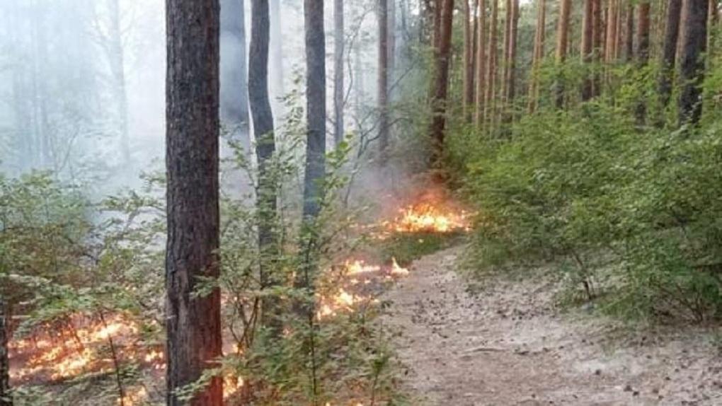 «Стойко сопротивляются сносу». Владельцы садов на ЖБИ весь июнь ловят поджигателей Шарташского лесопарка