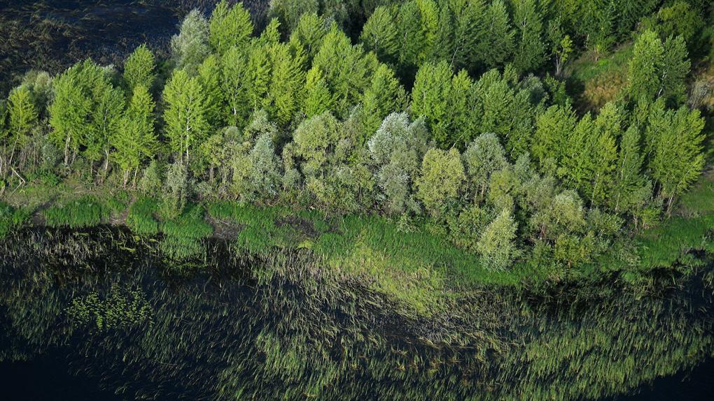 УрФУ получит 80 млн рублей на создание первого на Урале карбонового полигона. Зачем он нужен