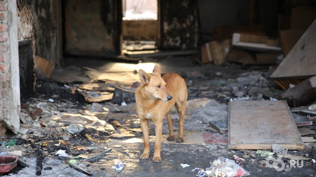 Ким Чен Ын объявил домашних собак символом «капиталистического декаданса». Их изымают и усыпляют
