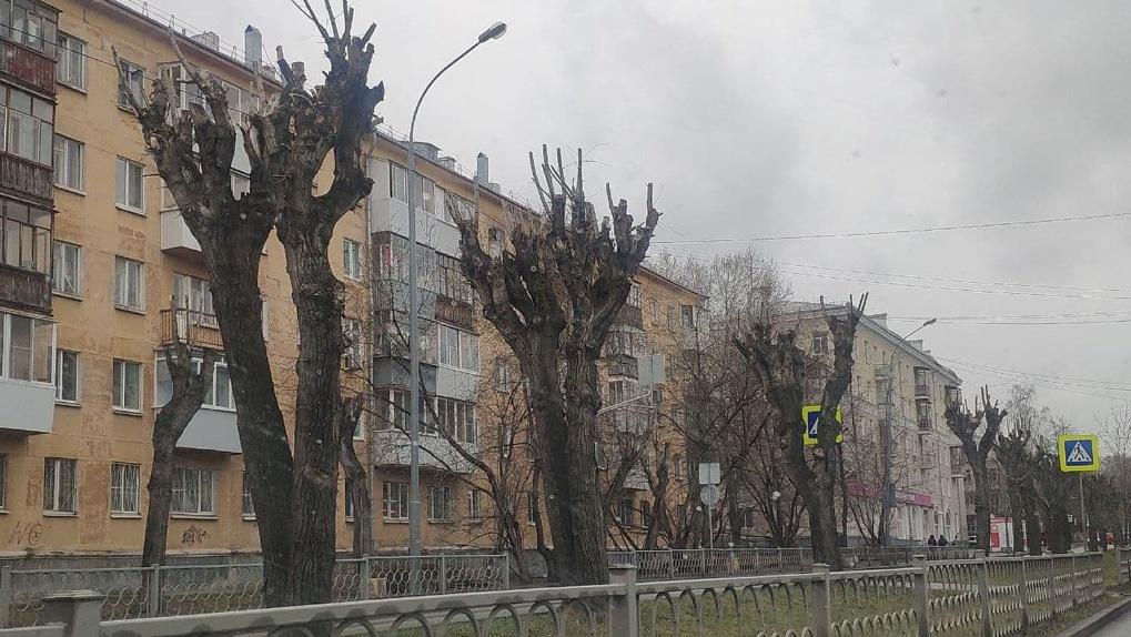 В Екатеринбурге до конца года спилят и обрежут 6,5 тысяч деревьев