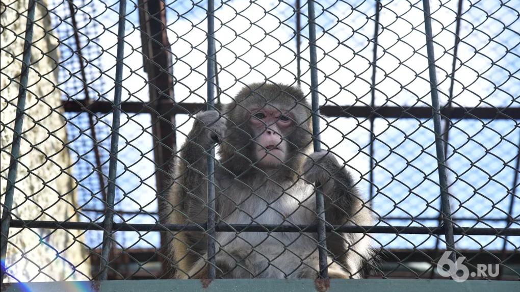 Екатеринбургский зоопарк не будут переносить из центра города. Но у него появится вторая очередь
