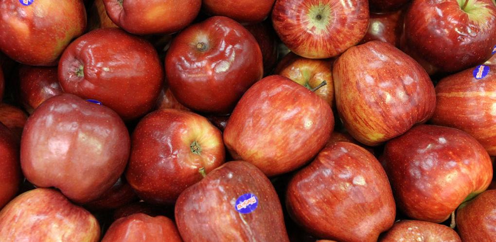 Под Екатеринбургом бульдозер превратит в пюре 19,5 тонн санкционных яблок