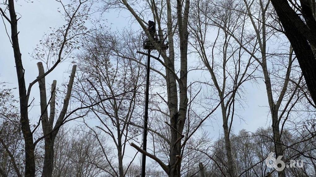В Екатеринбурге перестанут кронировать деревья «под ствол». Для этого переписали правила благоустройства