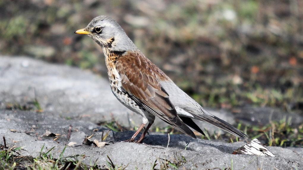 «Птицы умрут от разрыва сердца». Орнитологи заявили об опасности запуска салюта в парках Екатеринбурга