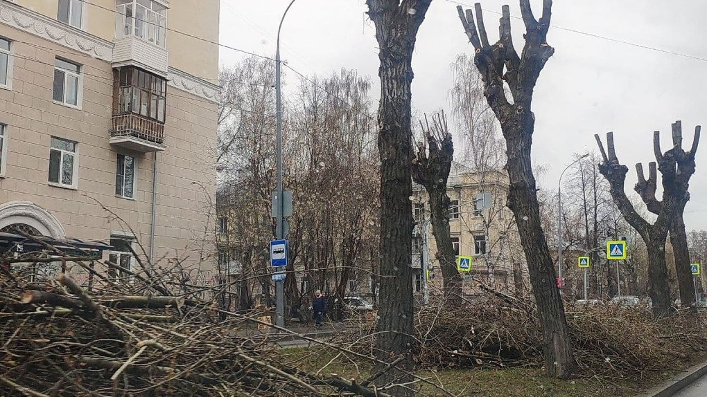Вижу, что деревья обрезают «под ствол», как этому помешать? Инструкция от человека, который смог