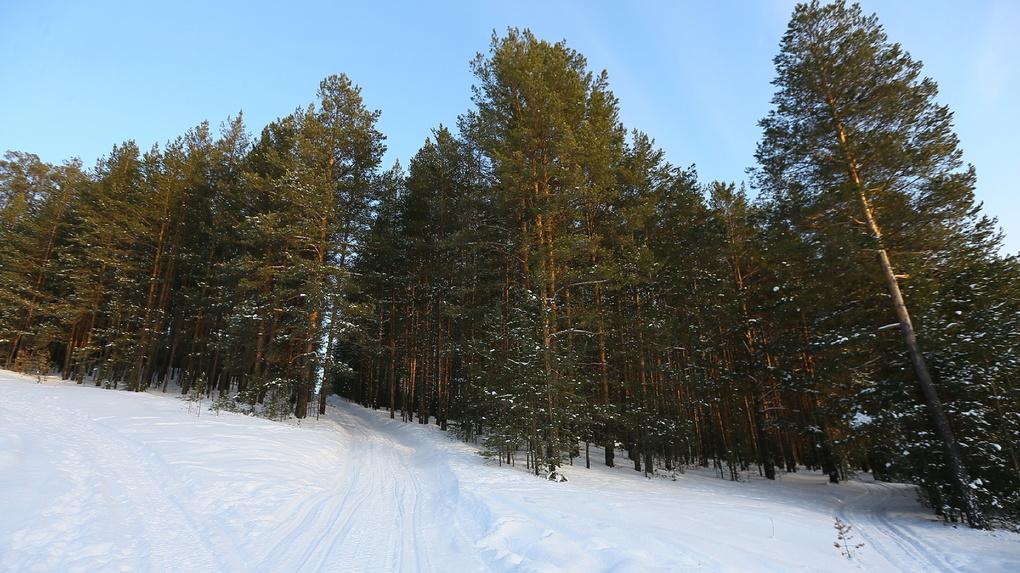 В Екатеринбург пришла теплая снежная зима