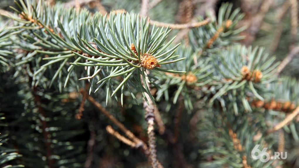 Шесть полезных способов избавиться от новогодней елки