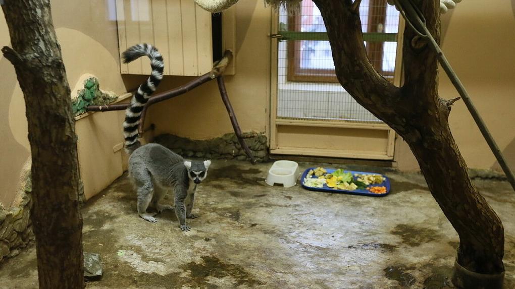 Екатеринбургскому зоопарку на 50% увеличили субсидии, но их все равно не хватает даже на корм