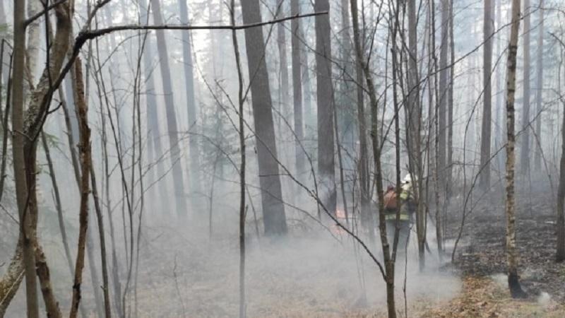 В России горят десятки тысяч гектаров леса. Города затянуло дымом и гарью