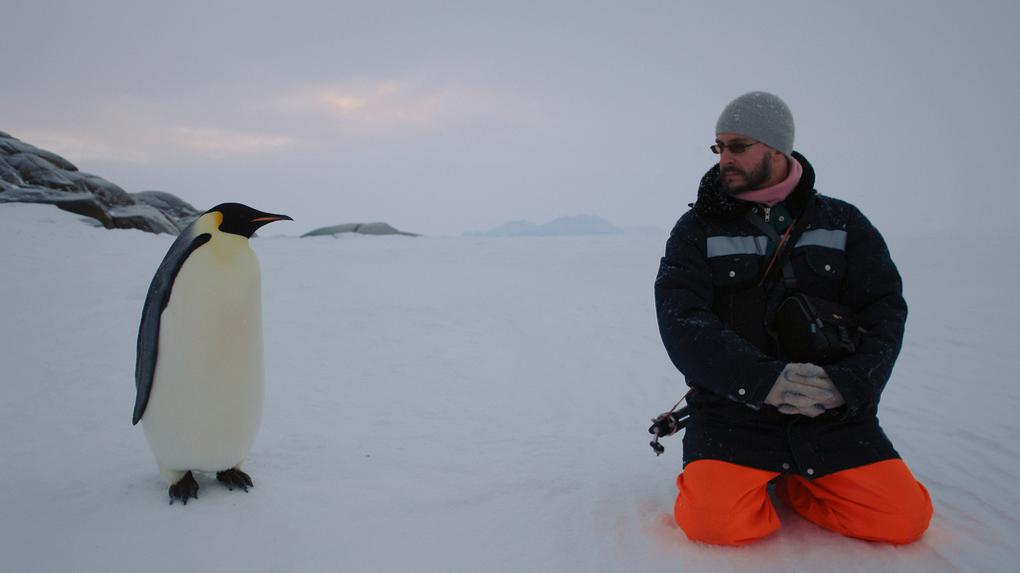 «Пионерлагерь для взрослых дядь»: вечный полярник – о быте Антарктики, шустрых пингвинах и бездне вокруг