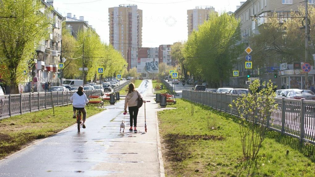Районная администрация поможет жителям Химмаша восстановить вырубленную аллею на Грибоедова. План