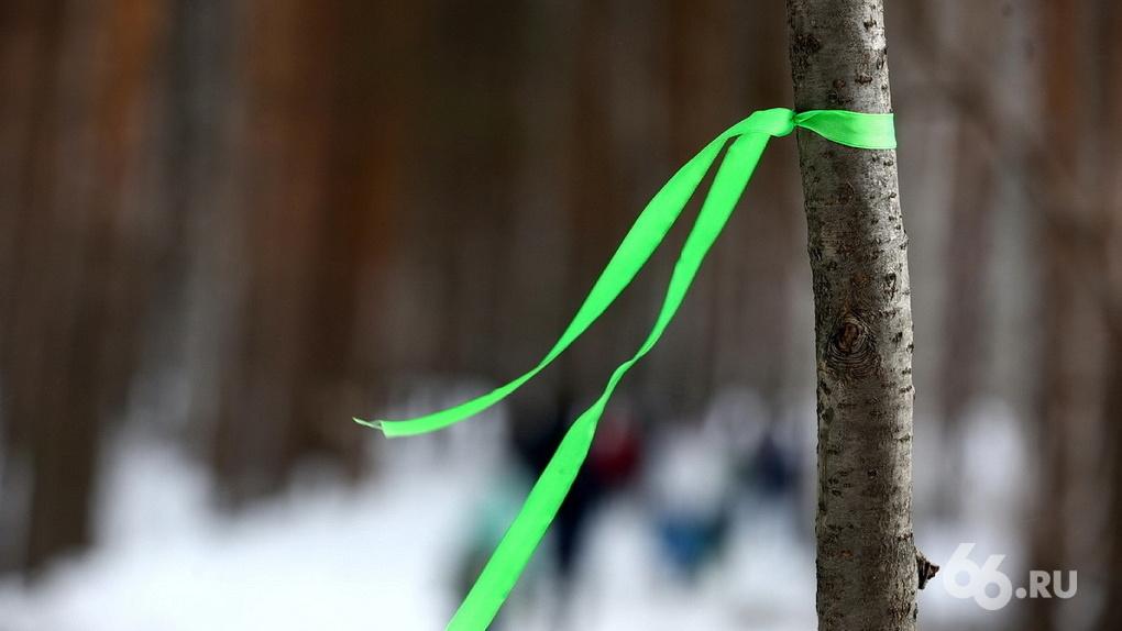 «Это благо – превратить дикий лес в современный парк»: Валерий Ананьев – о застройке Березовой рощи