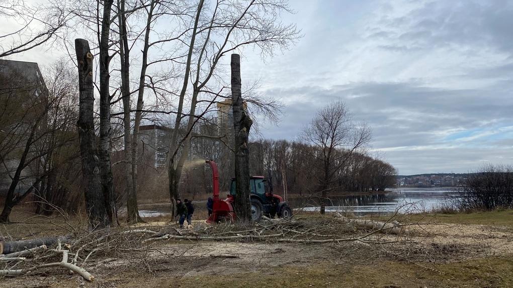 На Химмаше после обрезки тополей от деревьев остались голые столбы