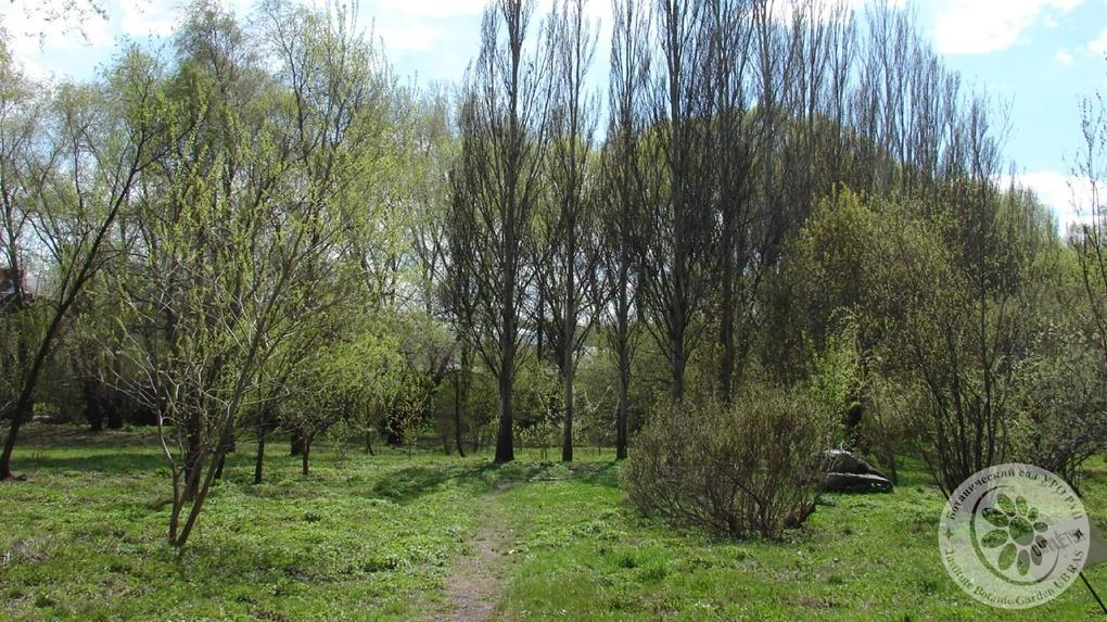 Вход в Ботанический сад УрО РАН сделают платным