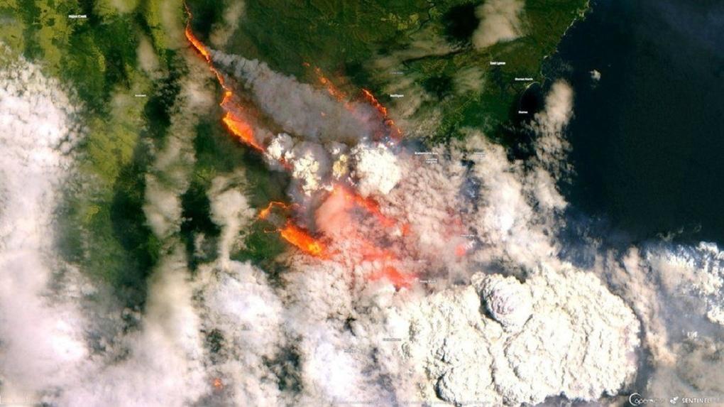 Горят леса, люди и коалы. Пожары уничтожают Австралию, пока вы празднуете Новый год. Фото