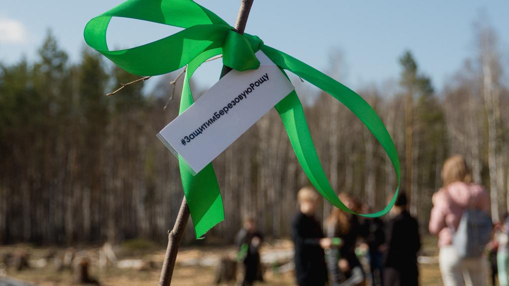 Жители Академического высадили тридцать березок взамен срубленных застройщиком деревьев