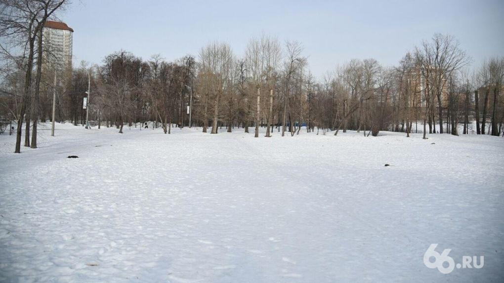 В парке УрГУПС рубят клены и будут строить бассейн. Защитники деревьев против, но всем все равно