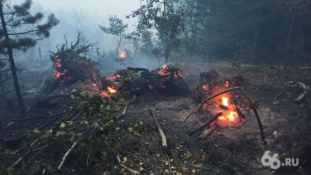 Почему так мало авиации и можно ли «захлестать огонь ветками»? Ответы на главные вопросы о лесных пожарах