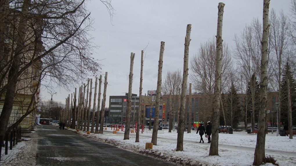 Из-за коронавируса дровосеки в Екатеринбурге так и не узнают, как правильно обрезать тополя